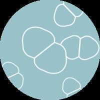CDMO-probiotics